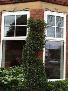 Accoya wood white sash windows